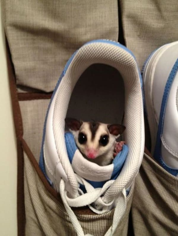 40 Pictures of Animal Playing Hide and Seek 28