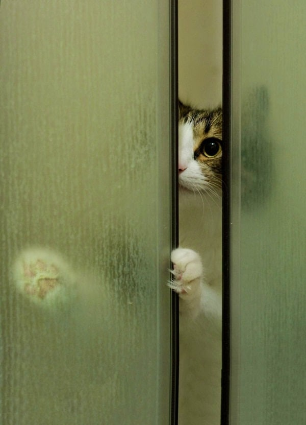 40 Pictures of Animal Playing Hide and Seek 29