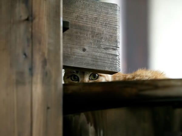 40 Pictures of Animal Playing Hide and Seek 3
