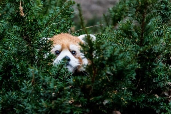 40 Pictures of Animal Playing Hide and Seek 31