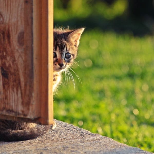 40 Pictures of Animal Playing Hide and Seek 32