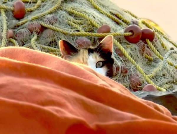 40 Pictures of Animal Playing Hide and Seek 33