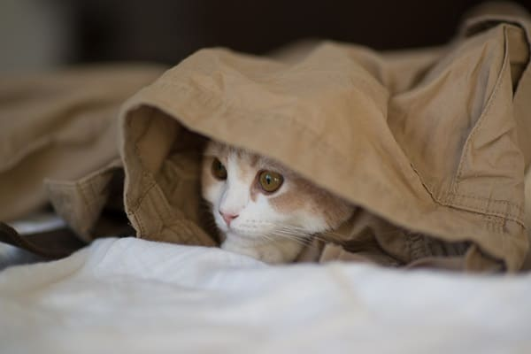 40 Pictures of Animal Playing Hide and Seek 7
