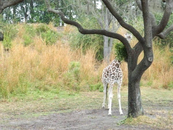 40 Pictures of Animal Playing Hide and Seek 8