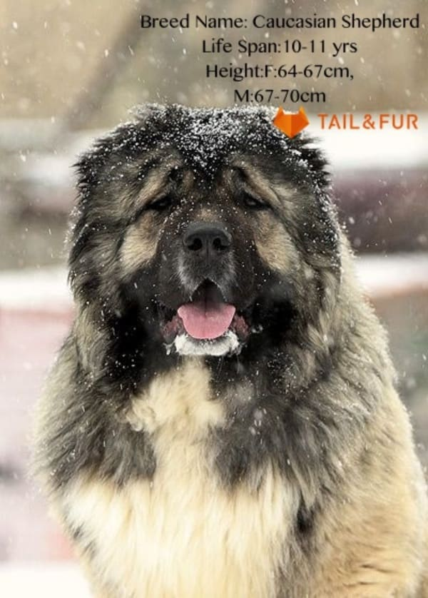 Biggest-Dogs-in-the-World