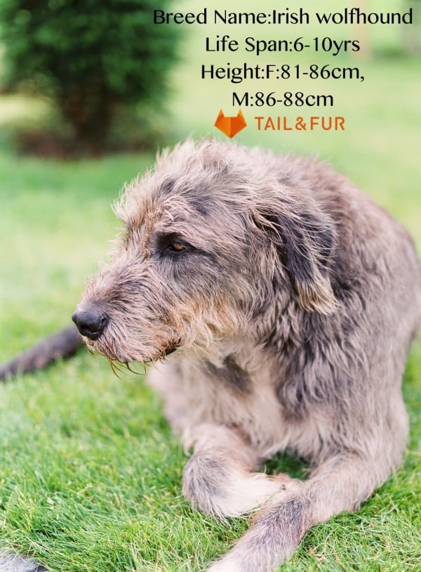Names Of Really Big Dogs