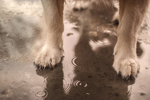Tips for Soothing Irritated Dog Paws 2