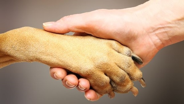 Tips for Soothing Irritated Dog Paws 3