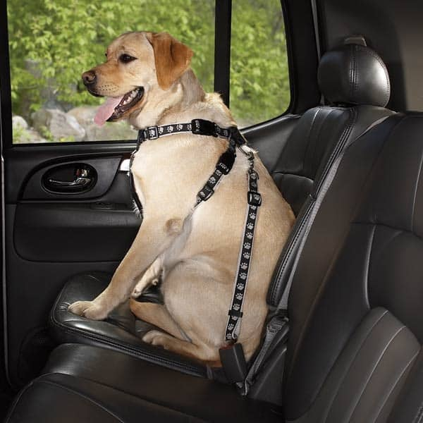 Travel Safely with your Pet by Car, Ship, Airplane and Train 2