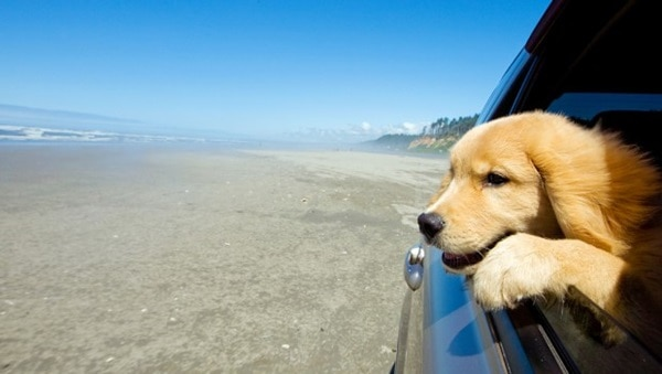 Travel Safely with your Pet by Car, Ship, Airplane and Train 3
