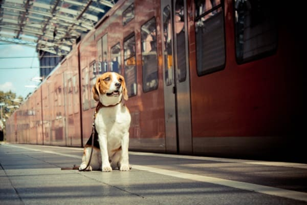 Travel Safely with your Pet by Car, Ship, Airplane and Train 4