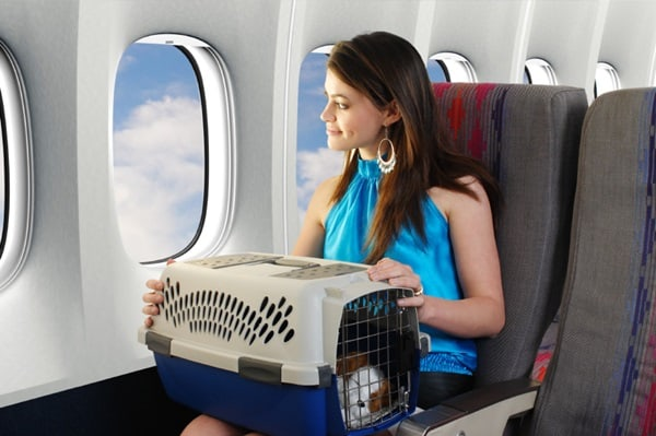 Travel Safely with your Pet by Car, Ship, Airplane and Train 5