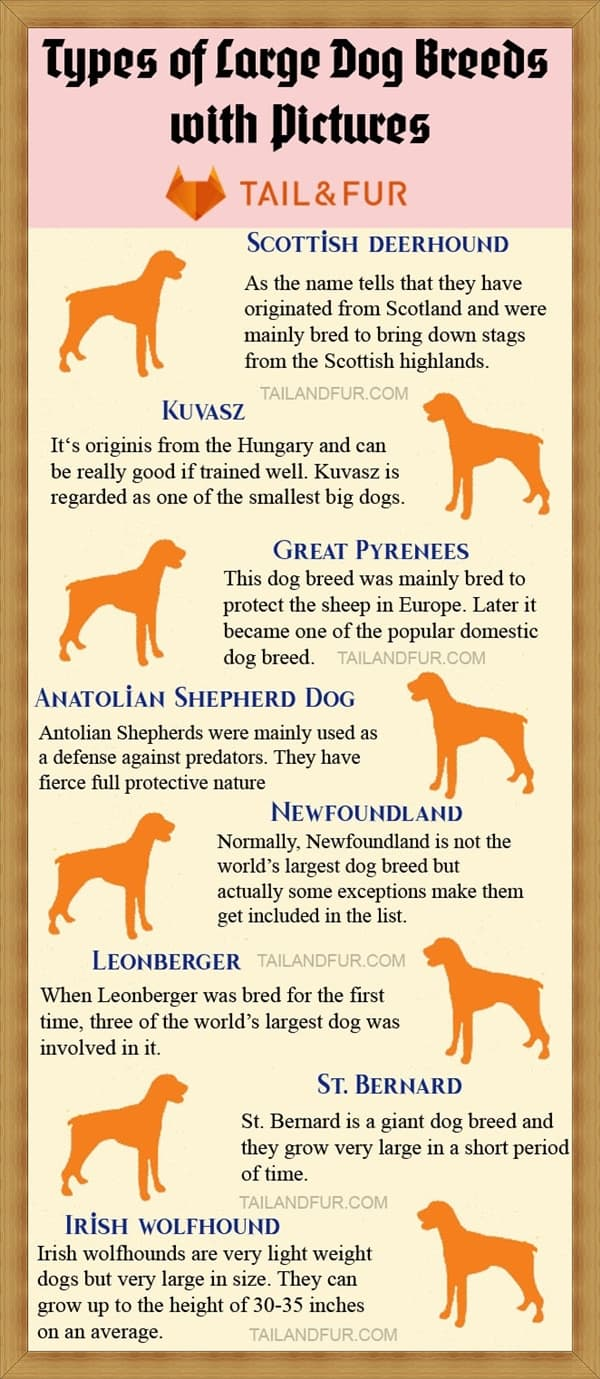 Types-of-Large-Dog-Breeds-with-Pictures