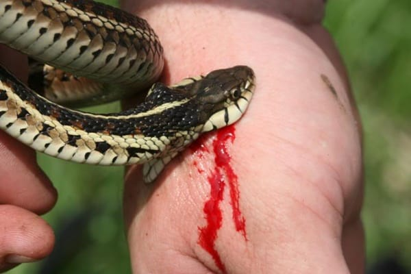 30 Small Snake Pictures in Human Hands 18