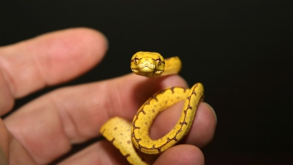 30 Small Snake Pictures in Human Hands 23