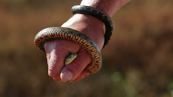 30 Small Snake Pictures in Human Hands 4