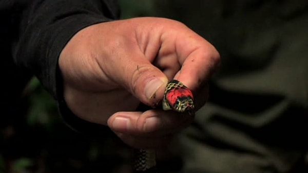 30 Small Snake Pictures in Human Hands 9