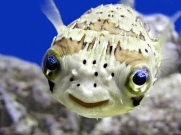 40 Adorable Pictures of Sea Animal Babies 17