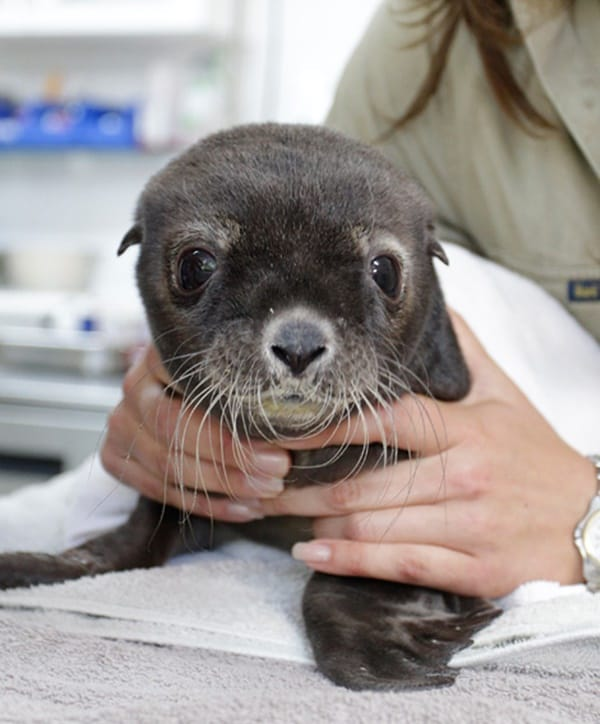 40 Adorable Pictures of Sea Animal Babies 18