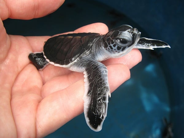 40 Adorable Pictures of Sea Animal Babies 20