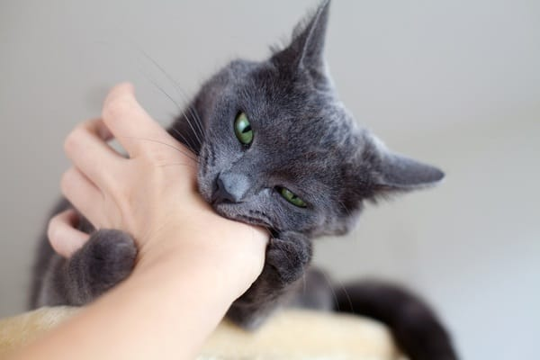 9 Tips to Stop your Cat Biting 1