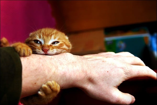 vinegar to remove cat urine odor