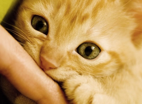 9 Tips to Stop your Cat Biting 5