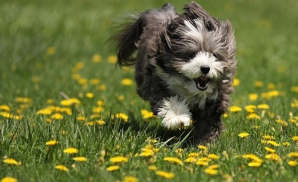10 Easiest Dog Breeds to Train 7