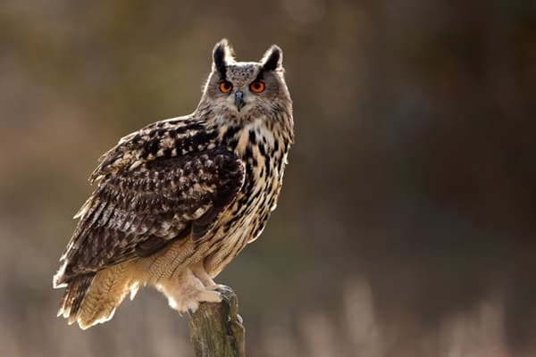10 Formidable Birds of Prey 10