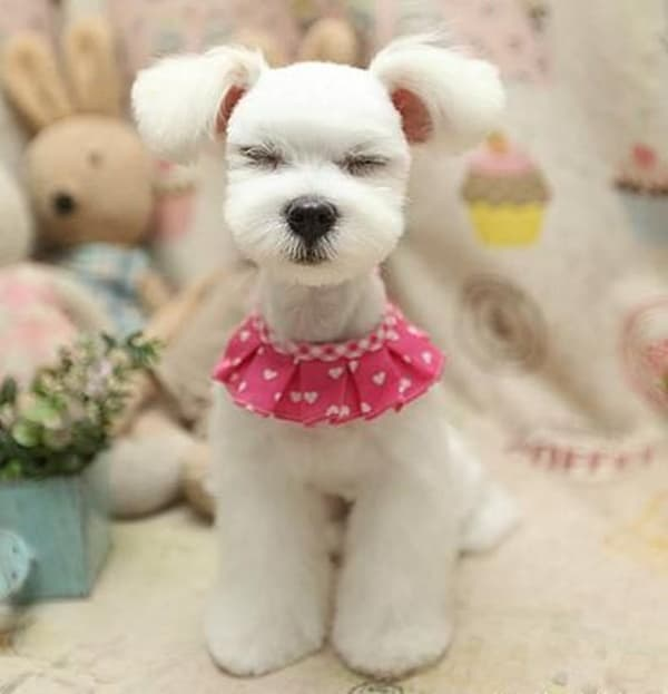 30 Dog Grooming Styles 1