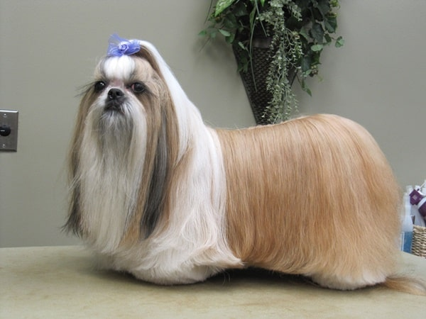 30 Dog Grooming Styles 13