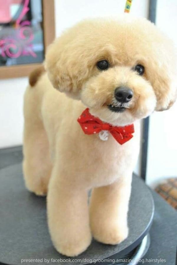 Atlanta Dog Grooming Services | Dog Products | Puppy Haven ... |Dogs Grooming