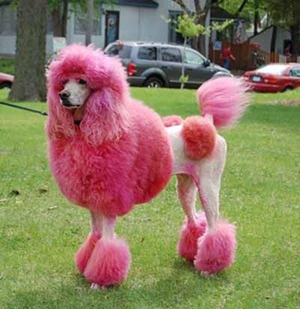 30 Dog Grooming Styles 16