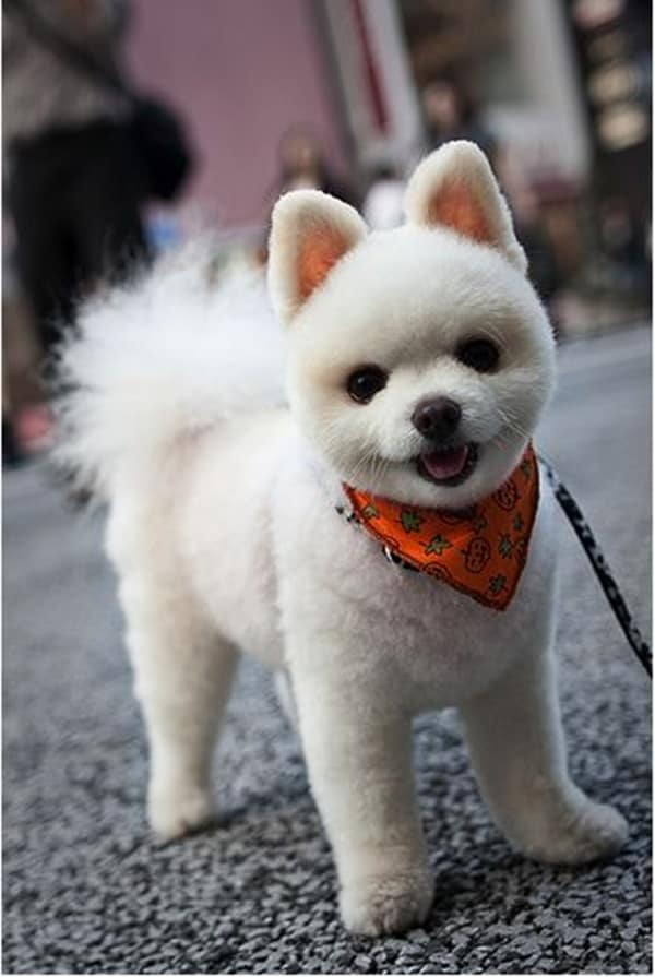 30 Different Dog Grooming Styles Tail And Fur