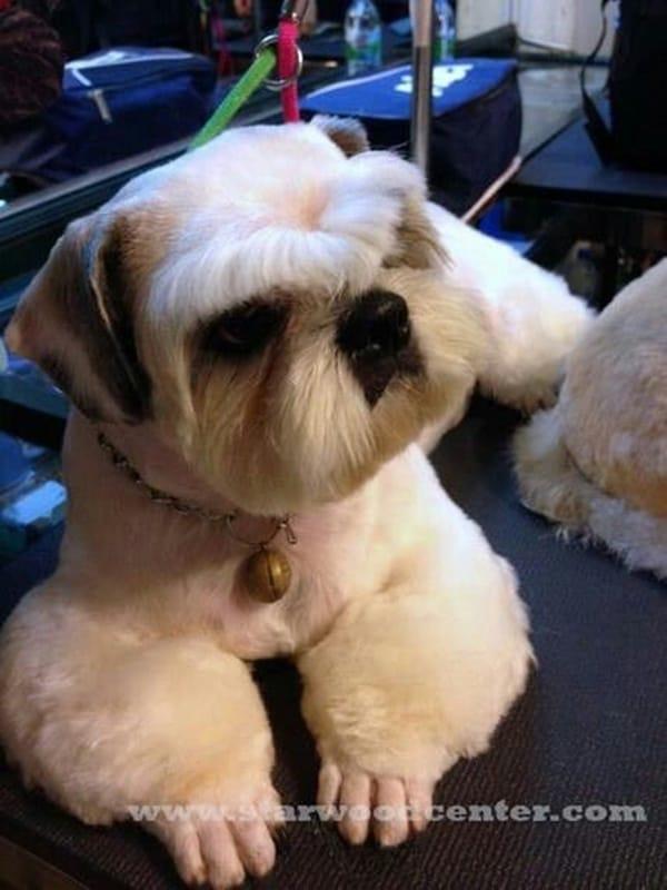 30 Dog Grooming Styles 20