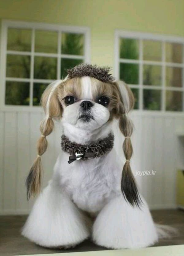 30 Dog Grooming Styles 22