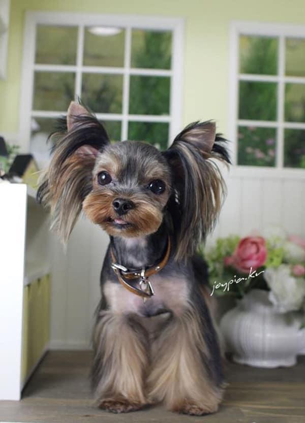 30 Dog Grooming Styles 24