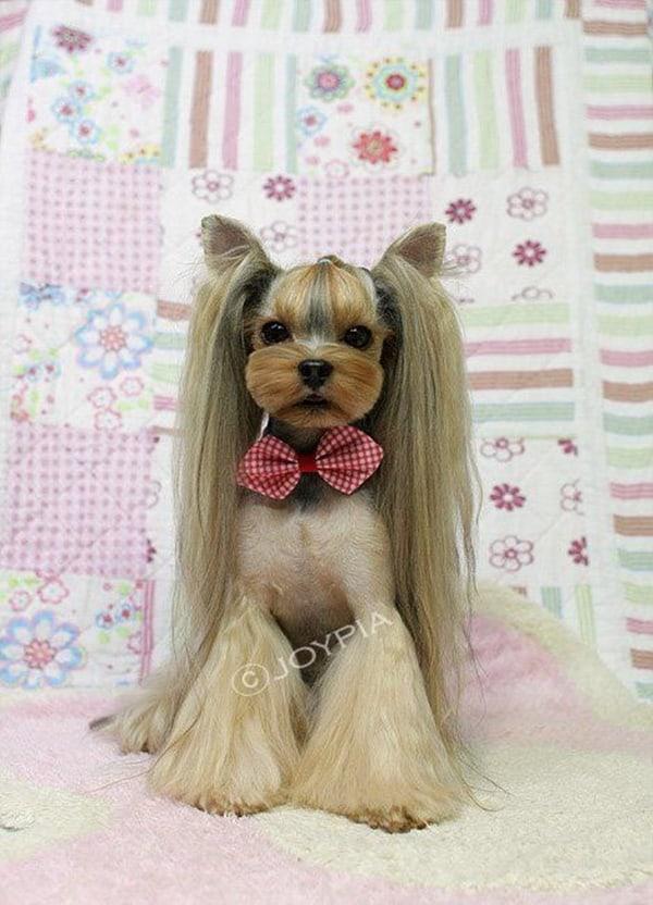 30 Dog Grooming Styles 26