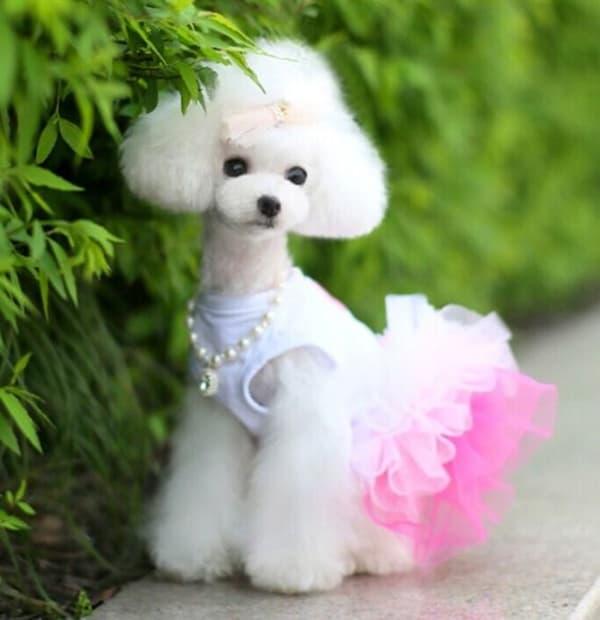 30 Dog Grooming Styles 28