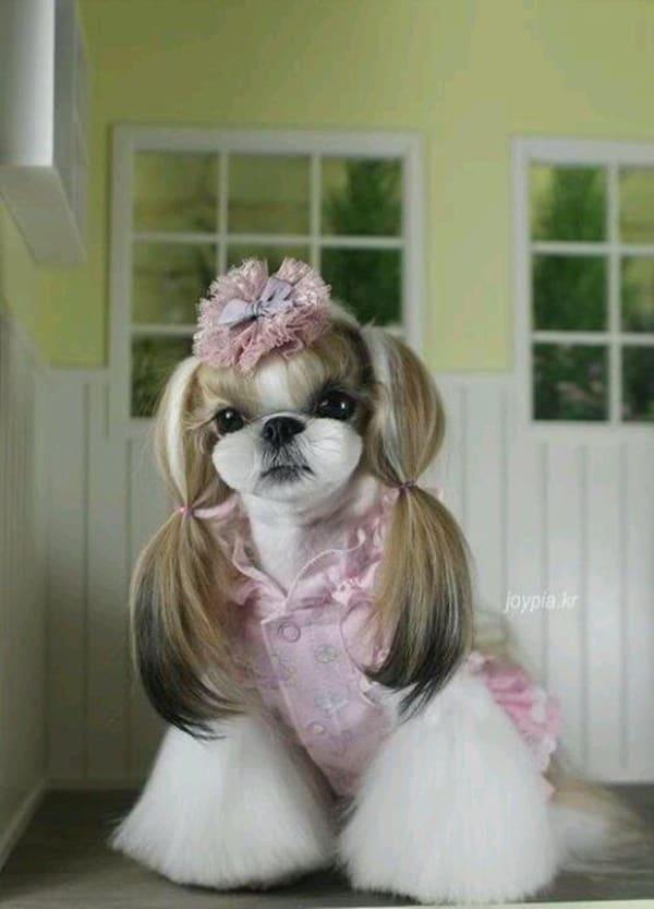 30 Dog Grooming Styles 30