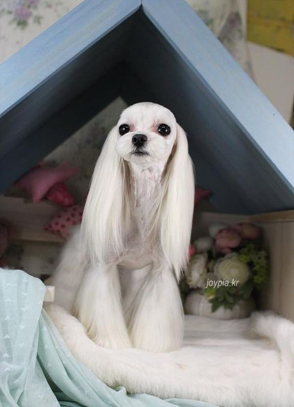 30 Awesome Dog Grooming Styles In 2019