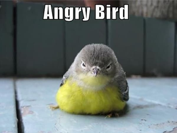 30 Funny Bird Pictures 1
