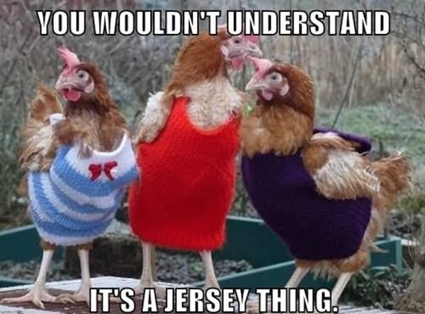 30 Funny Pictures of Chicken 15