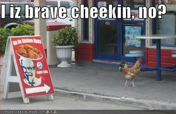 30 Funny Pictures of Chicken 22