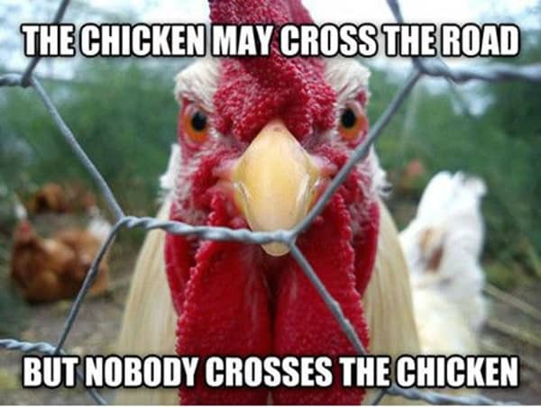 Chicken Quote: 30 Hilarious And Funny Pictures Of Chickens