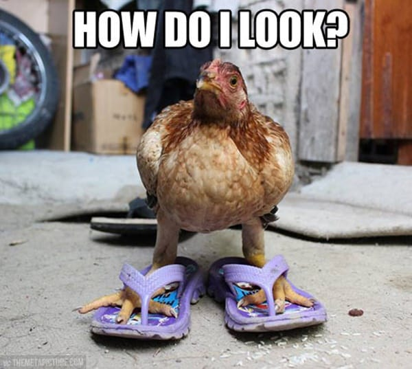 Chicken Aminal Wearing Shoes