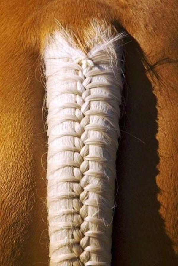 30 Horse Tail Braids Ideas 4