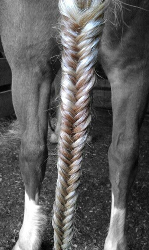 30 Horse Tail Braids Ideas 9