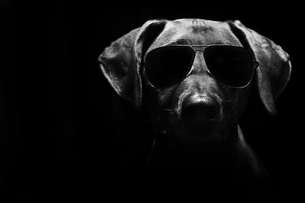 40 Ideas of Cool Photography with Dogs 14