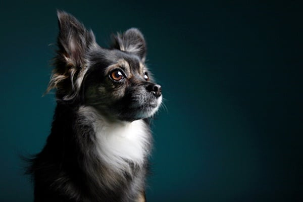 40 Ideas of Cool Photography with Dogs 2